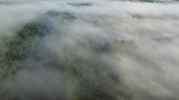 鬱蒼とした森の朝秋の霧。