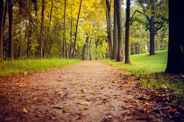 Morning autumn park. picture autumn park.