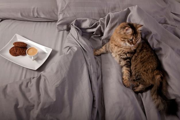 침대에서 모닝 커피