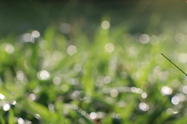 Morning dew drops on green grass defocused blurred background in the nature