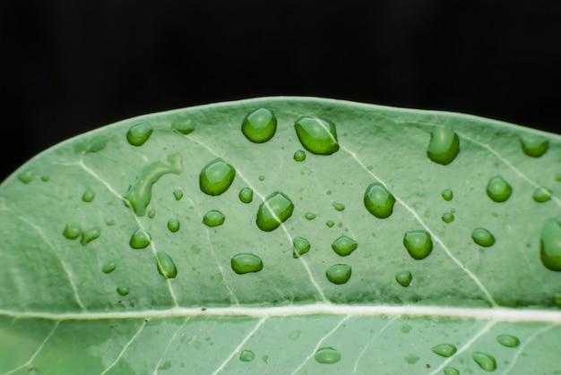 朝露が緑の葉に落ちる。