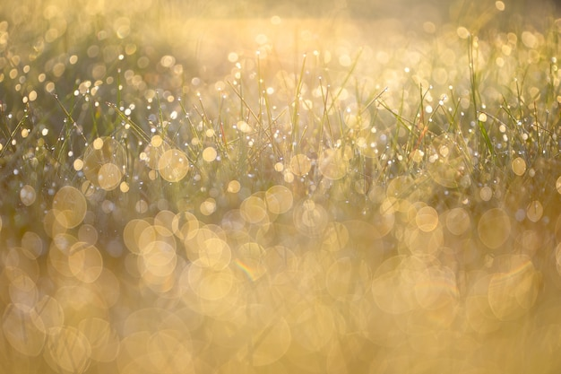 Morning dew on the grass in the sunlight.