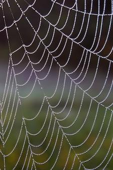 Утренняя роса на паутине