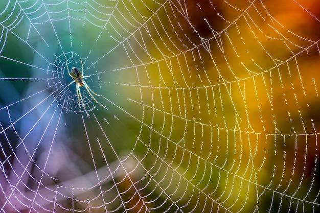 거미줄에 맺힌 아침 이슬. 이 슬 방울에 거미줄입니다. 매크로 자연의 아름다운 색상.