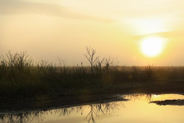 Morning field after rain. beautiful summer morning. summer nature
