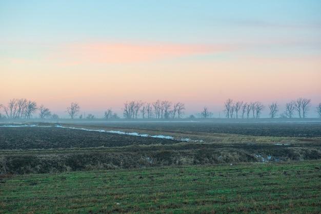 Утреннее поле с деревьями на фоне голубого неба
