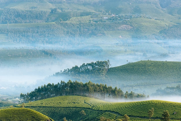 Morning fog covers trees on the mountain hills in india. tea plantanions of munnar from above.