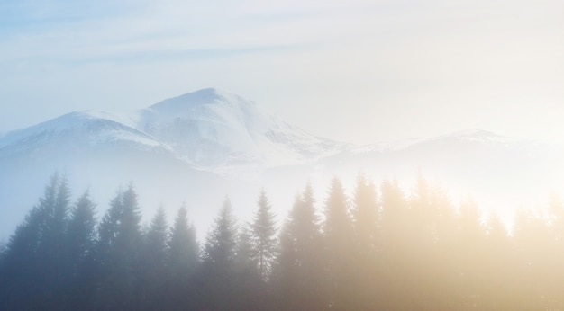 朝の霧が金箔で覆われた秋の山の森でスクラップでゾッと。バックグラウンドで雄大な山々の雪に覆われたピーク