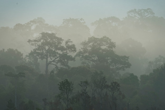 Morning fog in dense tropical rainforest, thailand