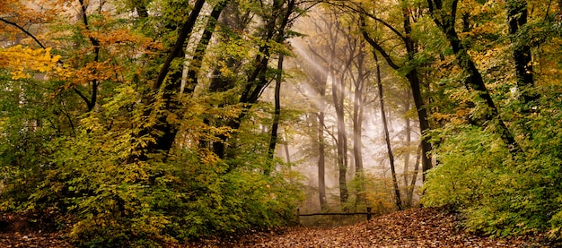 Morning fog in the forest