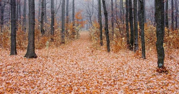 秋の森の朝の霧。乾燥した葉で覆われた土地