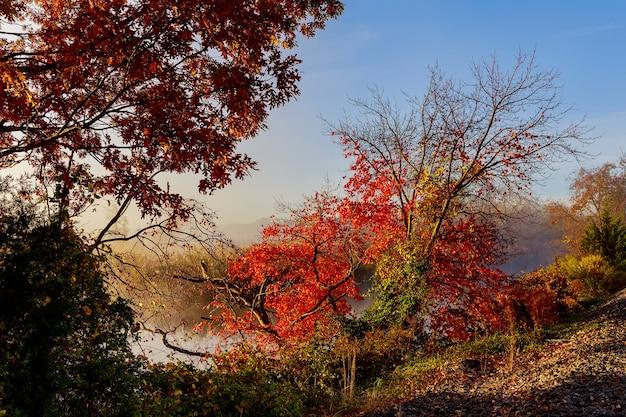 Утренний туман на озере мирный пейзаж с утренним туманом, когда он начинает разгораться на этом спокойном умиротворяющем озерном пейзаже