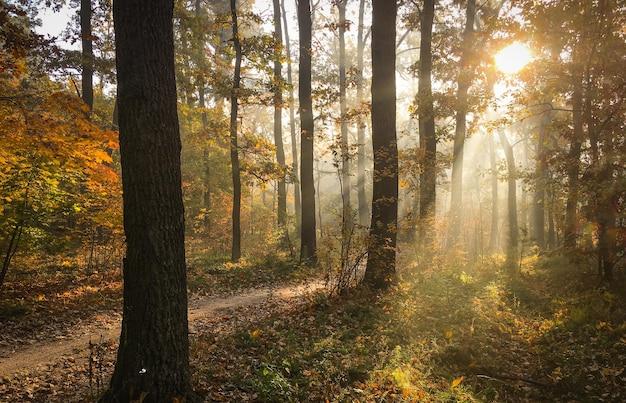 Утренняя свежесть в красивом осеннем лице, лучик солнца проходит сквозь ветви красных лучей на рассвете.