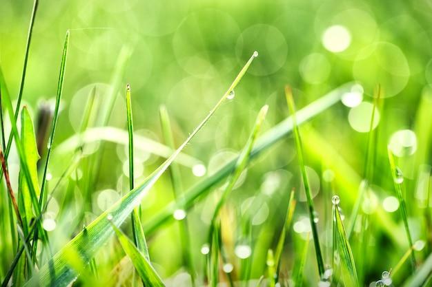 朝の緑の草