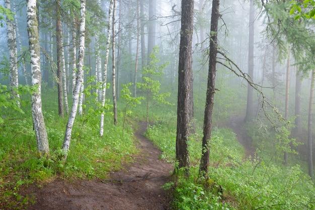 Утро в туманном лесу