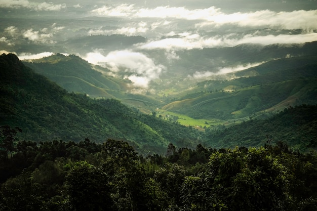 Morning light lit the green tropical rain forest in nan province, thailand.