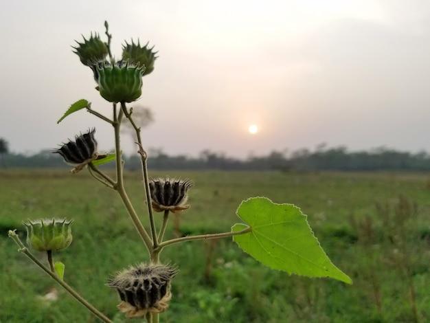 자연과 함께하는 아침 햇살