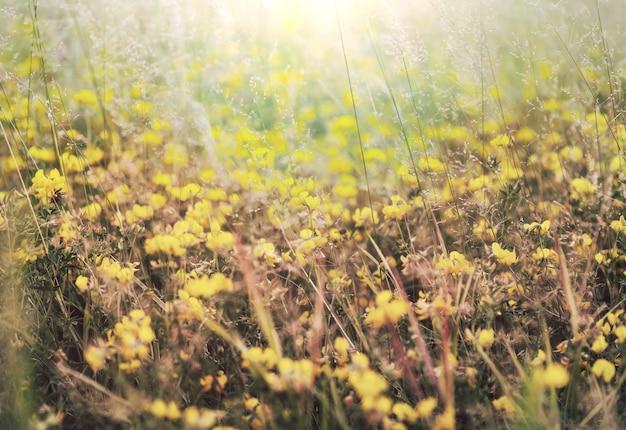 朝の牧草地。抽象的な自然な背景。滴のある新鮮な春の草