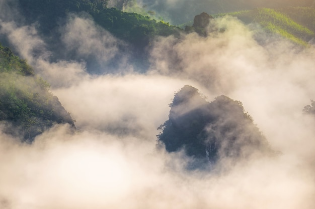 산 위에 아침 안개.