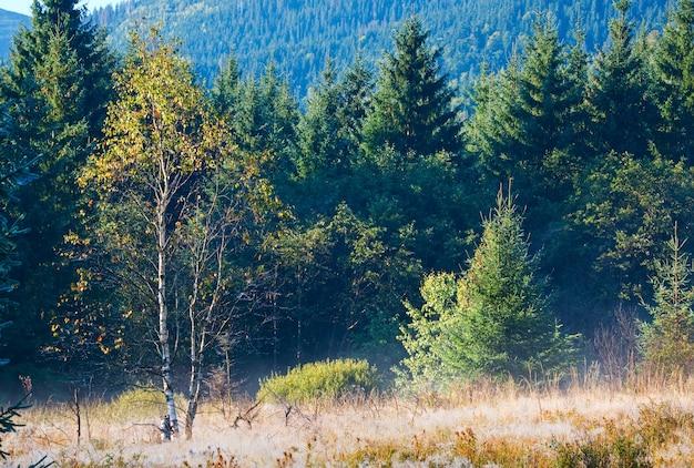 아침 안개가 자욱한 가을 산 풍경, 잔디에 포플러 씨 술이 있습니다.
