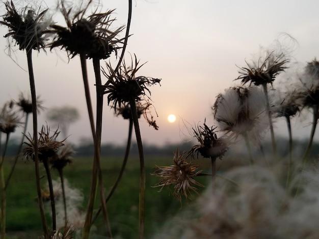아침 자연 배경 사진
