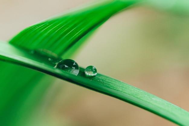 Morning nature with beautiful drop.