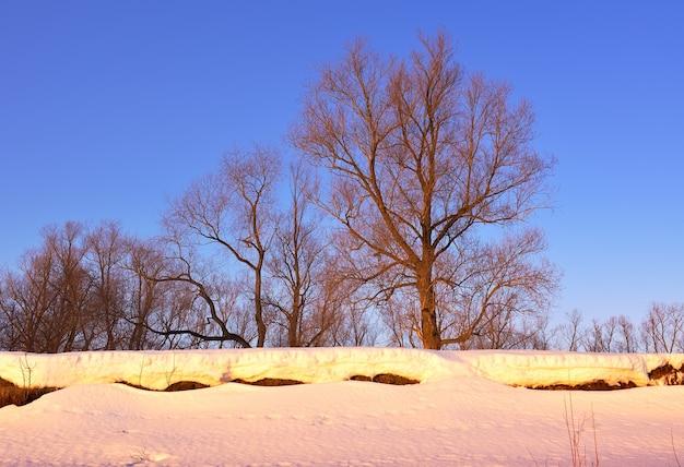 川の近くの崖の上に裸の枝があるオブツリーのほとりの朝