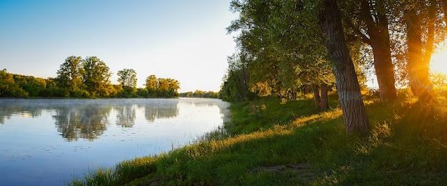 川の土手での朝、太陽光線は水の霧の上の川で木の枝を突き抜けます。