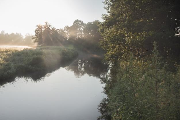 Утро на реке рано утром камыши туман туман и водная гладь