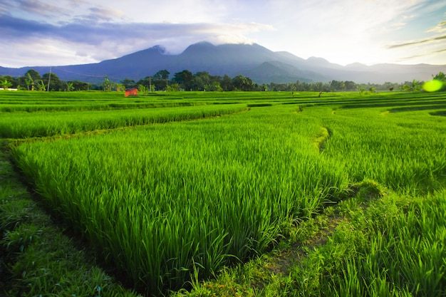 Morning sky at rice fields in north bengkulu indonesia