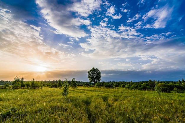 Morning summer landscape with a lone tree in the meadow with sunrise and sunlight in the cloudy sky