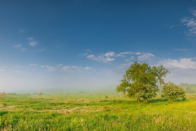 タンポポと朝夏の牧草地