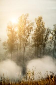 木の周りの秋の霧を燃やす朝日