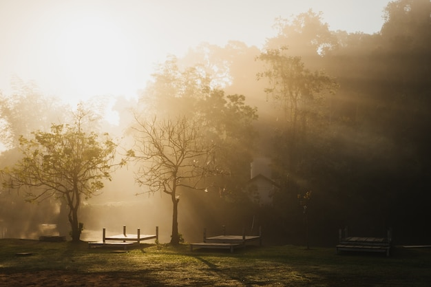 The morning sun on a foggy in the campinh site at khao yai national park, thailand.