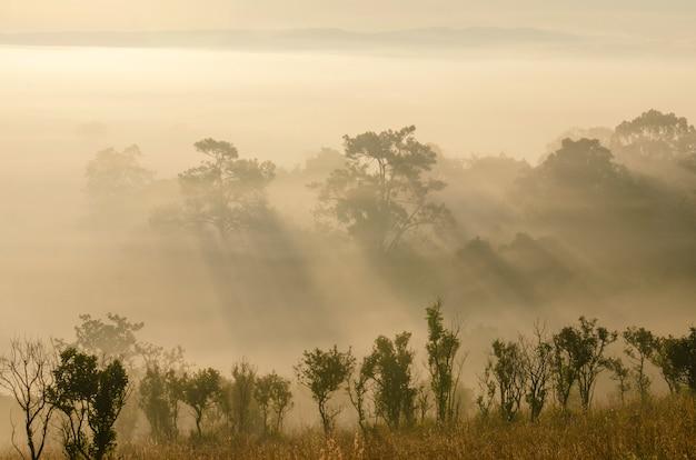 국립 공원 숲의 한가운데에 아침 해