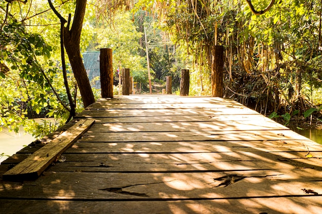 Morning sunlight through trees wooden bridge in tropical rain forest