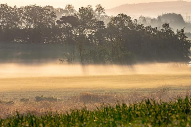 Утренний восход и туман на ферме ансон, корея