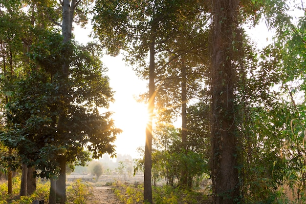 Morning sunrise on the field of thailand rural