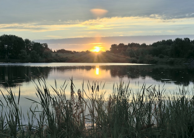 Morning sunrise over the lake with reeds