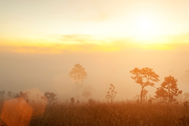 Morning sunrise on mountain with trees and fog. fresh nature and travel background.