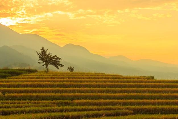 美しい日の出の黄色い米と山の田んぼエリアの朝の景色