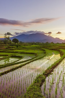 Morning view of rice fields with reflection of the morning sky in bengkulu, indonesia