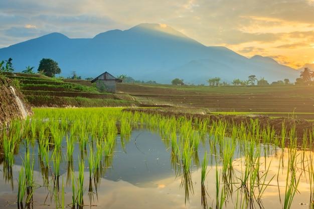 산에서 물이 흐르는 논과 마을 분위기의 아침 풍경