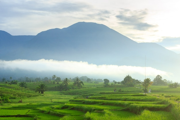 Morning view with leafy mountains in bengkulu when the morning is beautiful