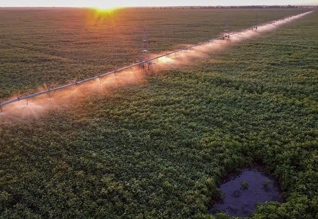 Утренний полив поля с посевами сои. солнечный свет освещает капли воды, а система орошения орошает фонтан.