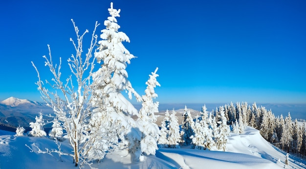 Утренний зимний спокойный горный пейзаж с елями на склоне (карпаты, украина).