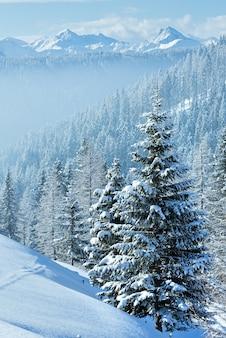 Утренняя зима туманный горный пейзаж с еловым лесом на склоне.