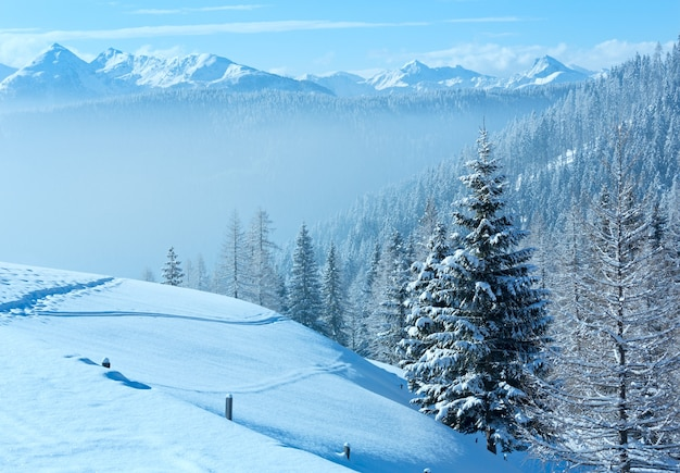 Morning winter misty mountain landscape with fir forest on slope.