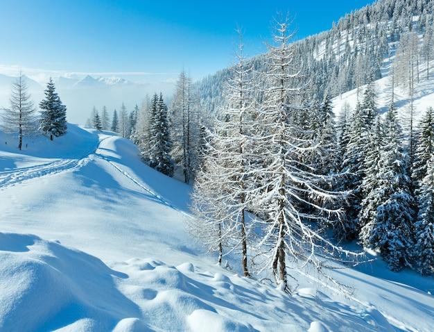 Утренняя зима туманный горный пейзаж с еловым лесом.
