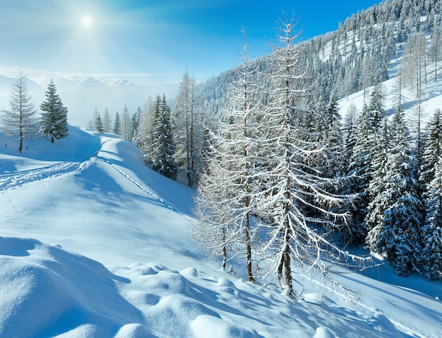 Morning winter misty mountain landscape with fir forest .